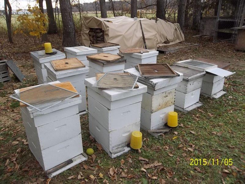 Bee Hives | Ohio Game Fishing - Your Ohio Fishing Resource