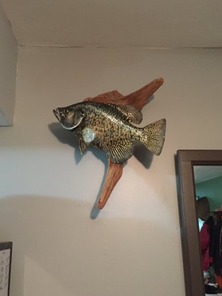 Good taxidermist ohio game fishing your ohio fishing for Fish taxidermy near me