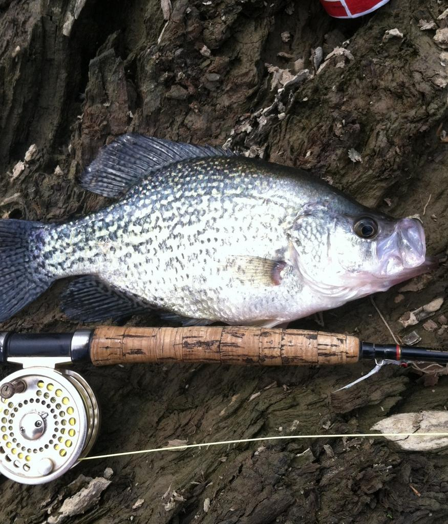 fly rod master angler ohio game fishing your ohio fishing resource