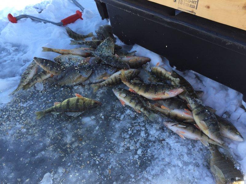 Portage lakes smackdown ohio game fishing your ohio for Portage lakes fishing