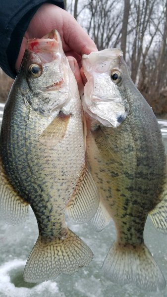 Plate size crappie.jpg