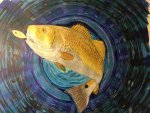A winter hobby.   Colored pencil drawing I did of a Red Drum.