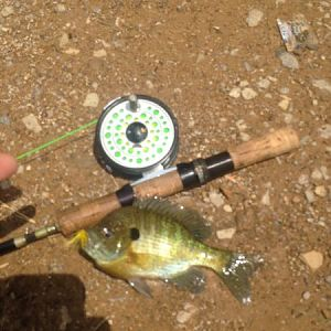 Fly rod/Dow lake- Bluegill