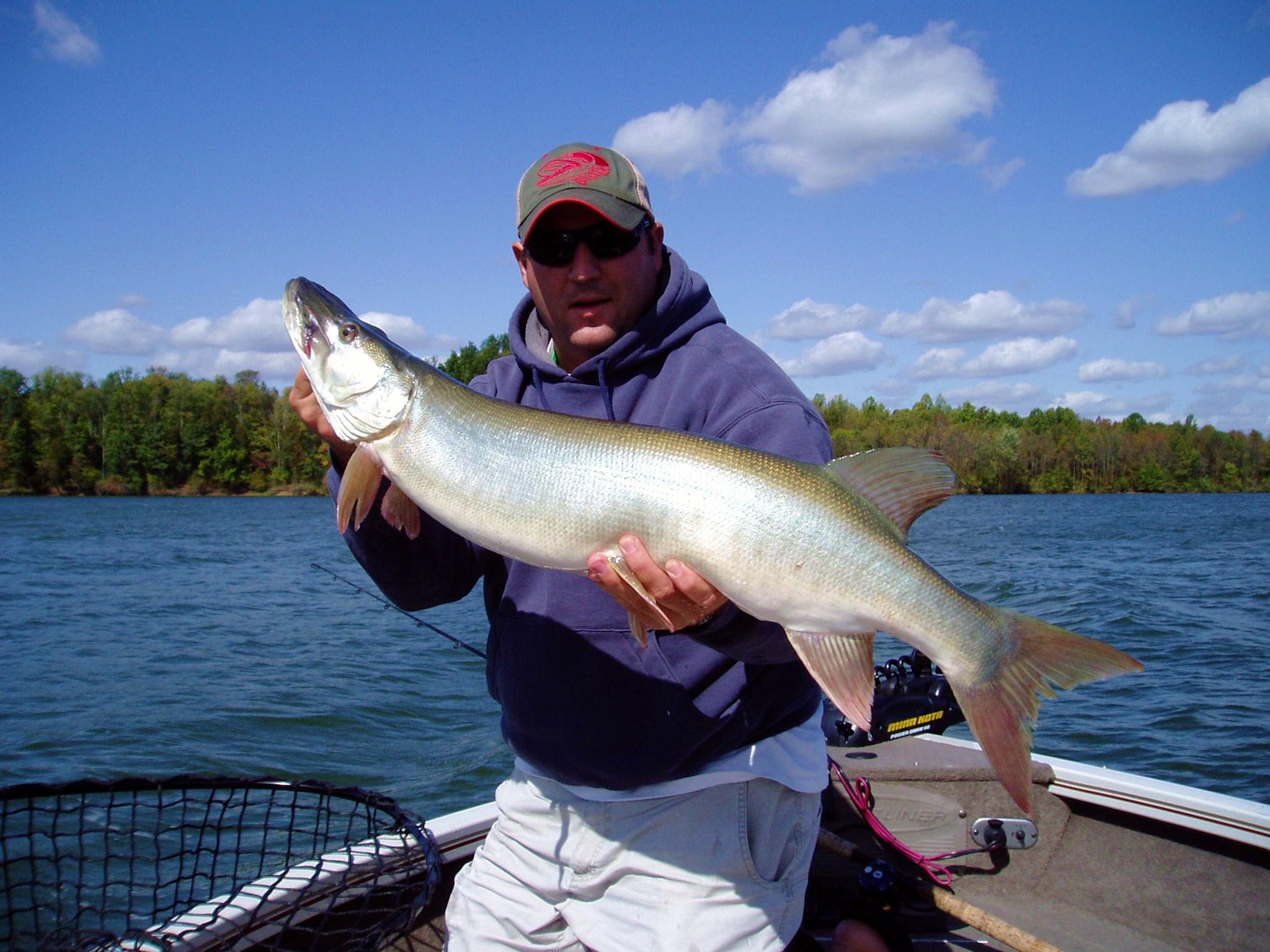 36 caesar muskie 10 03 09 ohio game fishing your ohio for Muskie fishing ohio