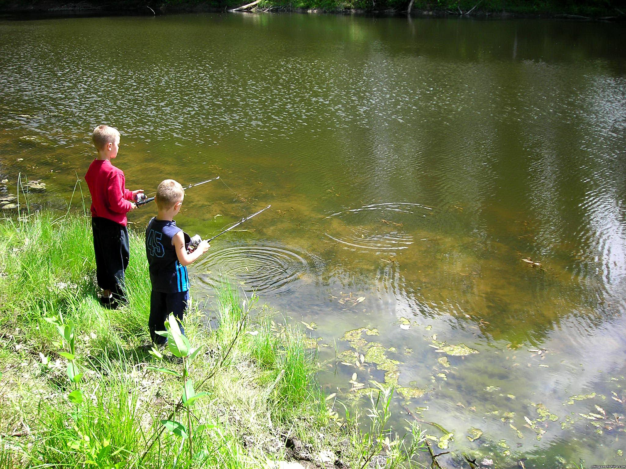 Armington pond 6 11 06 ohio game fishing your ohio for Big fish in a small pond game